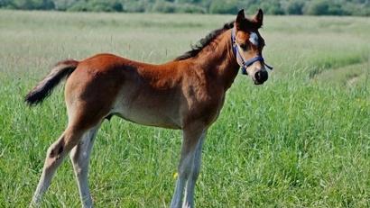 Первое упоминание о мезенской лошади относится к 1618 году