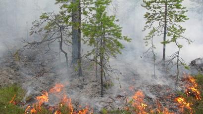 Пятый, наивысший, класс пожарной опасности продолжает сохраняться  в Ленском и Котласском районах, четвёртый класс – в Шенкурском районе