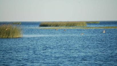 Озеро Лача. Фото из архива Центра по природопользованию и охраны окружающей среды Архангельской области
