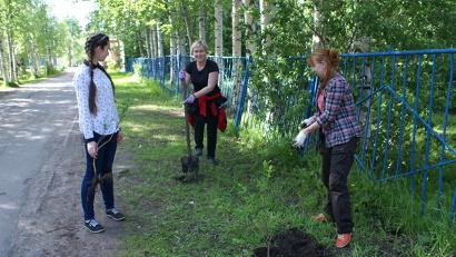 Деревья и кусты были посажены у культурного центра «Северный» и у школы № 37