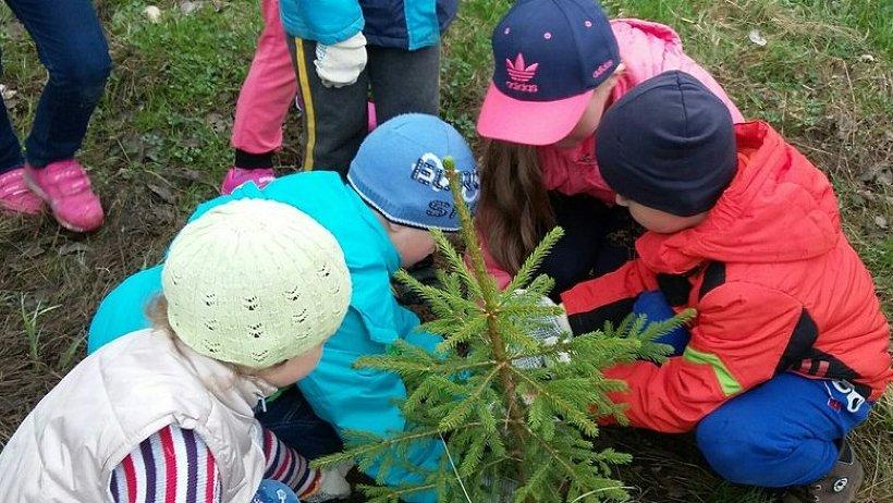 Во всероссийском Дне посадки леса приняли учатие тысячи северян от мала до велика