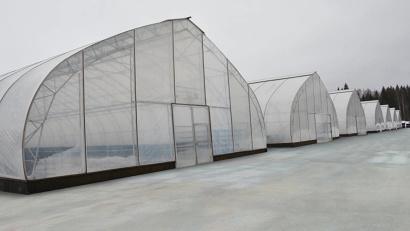 В модернизацию Устьянского семеноводческого центра уже вложено около 60 млн рублей