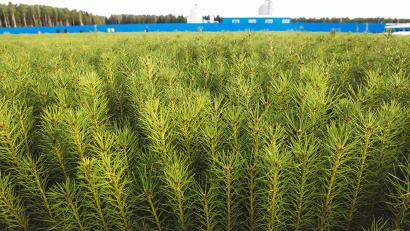 В прошлом году в питомниках и теплицах Архангельской области было выращено 16,5 млн штук сеянцев. Фото ИД «Двина»