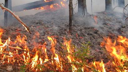 По погодным условиям в лесах Устьянского района и под Северодвинском установился пятый, наивысший, класс пожарной опасности