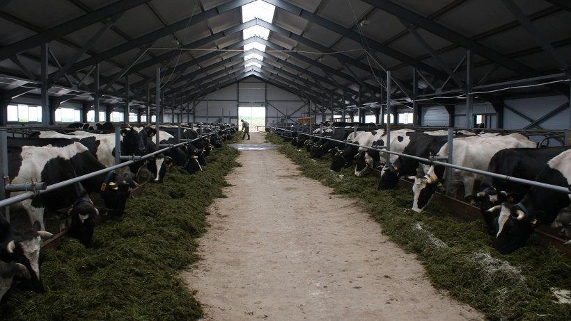 Инвестиционный проект по строительству фермы в 2016 году поддержало министерство АПК и торговли Архангельской области