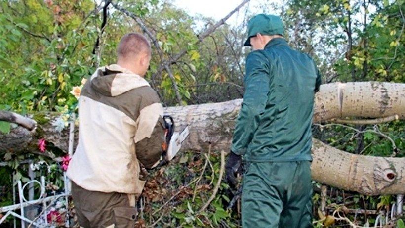 Под наблюдением сотрудников колонии воспитанники убирали поваленные недавним ураганом деревья