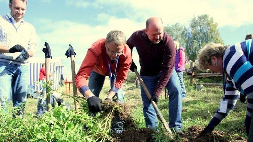 Гости музея традиционно помогают выкопать картошку на огороде возле будущего музея
