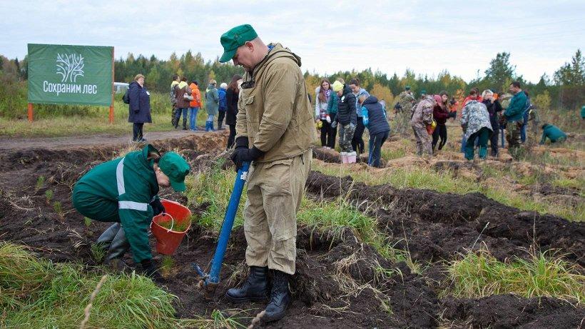750 молодых сосен высажено в Вельске в рамках акции «Сохраним лес!»