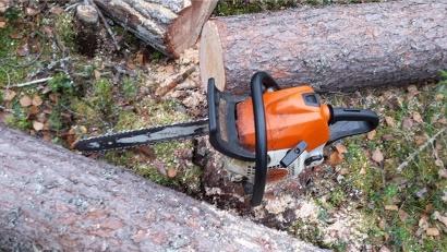 Общий объём нелегально заготовленной древесины превысил 46 кубометров