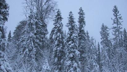 Лес – важнейший источник пополнения федеральной и областной казны