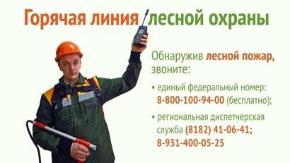 Телефоны «горячей линии» лесной охраны работают в круглосуточном режиме