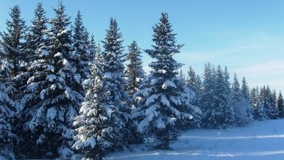 Ведущие спортсмены Архангельской области на своём примере покажут, как заготовить новогоднюю ель без нарушения законодательства и ущерба природе