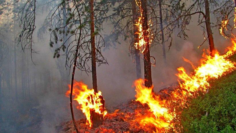 Основной причиной возникновения возгораний остаётся нарушение правил пожарной безопасности в лесах населением