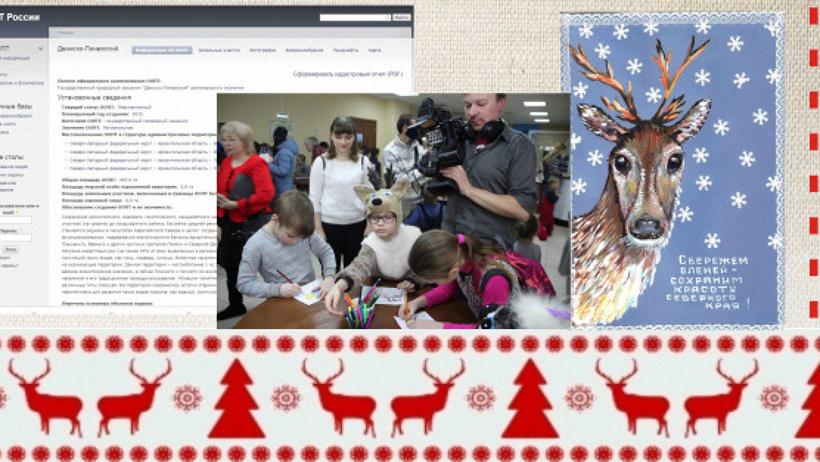 Сотрудники центра представили свой проект по защите дикого северного оленя, включенного в Красную книгу Архангельской области