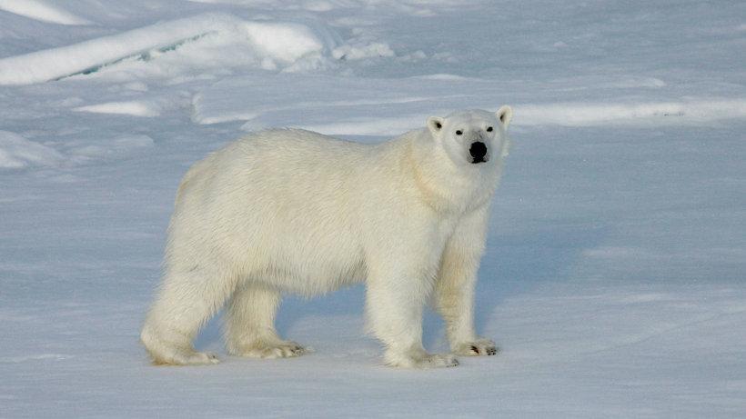 Одним из основных направлений реализации плана Года экологии в России стала защита окружающей среды Арктической зоны. Фото Алексея Сухановского