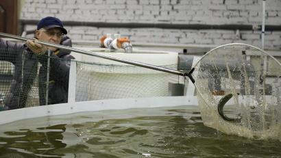 Установка закрытого водоснабжения для выращивания форели на вельском КФК «Козырев». Фото: П. Кононов