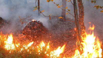Практика показывает, что первые лесные пожары в Поморье возникают из-за поджогов сухой травы