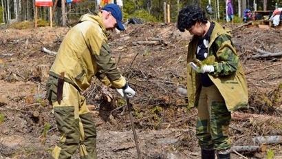 В этом году в рамках работ по лесовосстановлению в Архангельской области планируется посадить более 11 млн сосен и елей