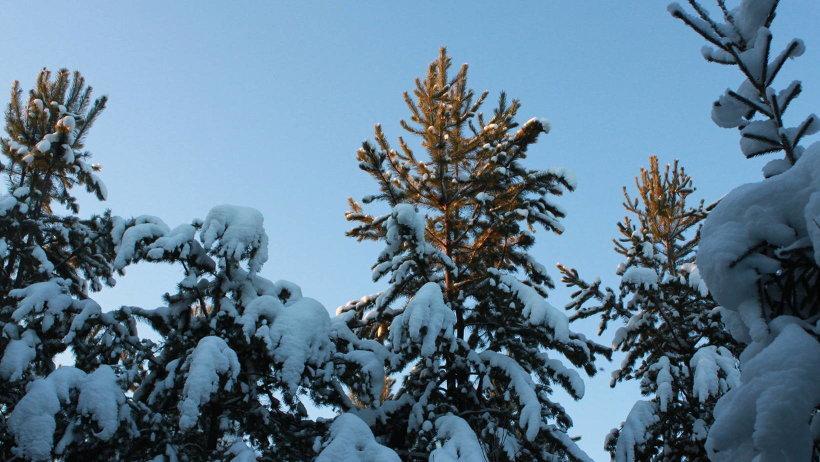 При заключении договоров лесничие расскажут, где можно срубить дерево без ущерба для природы