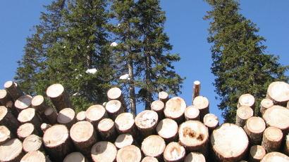 За десять месяцев этого года малый и средний бизнес Поморья приобрёл 452 делянки в объёме более 630 тысяч кубометров леса