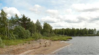 Лесные участки у Кудьмозера должны быть доступны для посещения