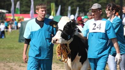 Племенное животноводство – один из драйверов развития областного агропрома. Фото газеты «Вельские вести»