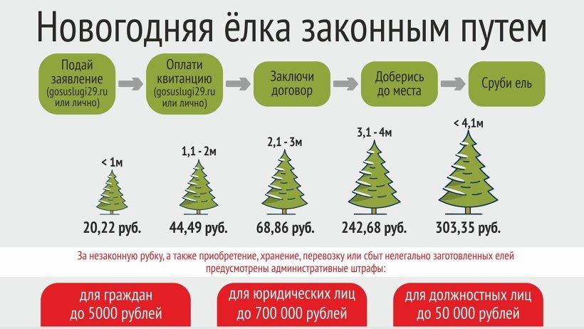 Отпуск хвойных деревьев производится на основании договора купли-продажи