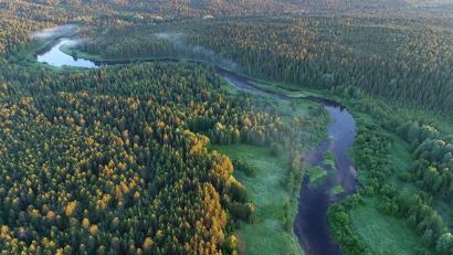 На территории заказника встречаются деревья в возрасте около 400 лет. Фото: И. Шпиленок