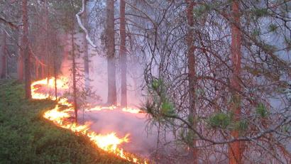 В период действия режима для нарушителей правил пожарной безопасности в лесах предусмотрены повышенные размеры административных штрафов