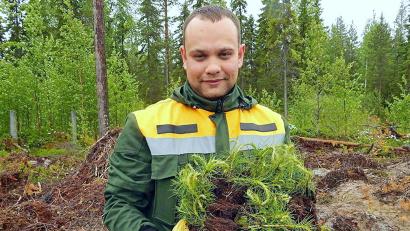 В Год воспроизводства лесов Архангельская область отмечена в числе лидеров по объёмам лесовосстановительных работ