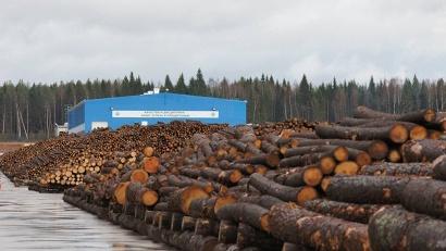 Общая стоимость продукции лесоперерабатывающих предприятий региона превысила 80 миллиардов рублей