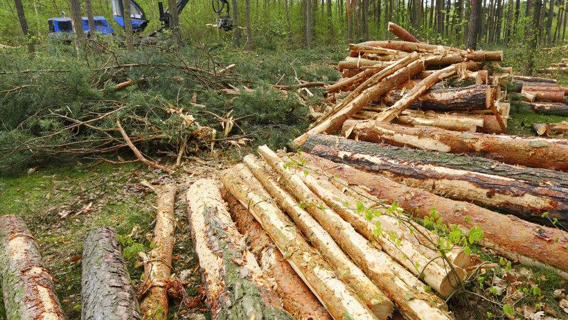 Процедура принятия нового Лесного плана не отразится на процессе лесозаготовки