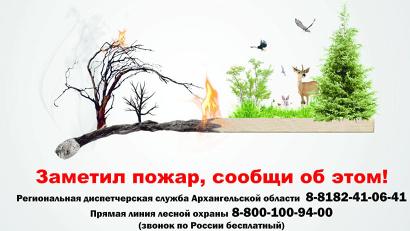 Организаторы конкурса – министерство природных ресурсов и ЛПК и Всероссийское общество охраны природы