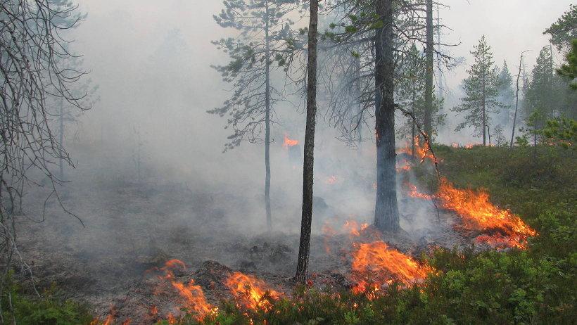С начала сезона в лесах Поморья зафиксировано 24 возгорания общей площадью около 40 га