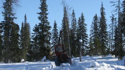 Актуализация данных имеет большое значение для развития лесного бизнеса, что в свою очередь оказывает влияние на ситуацию в районах области