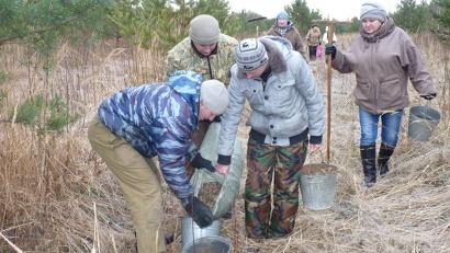 Сбор шишек был организован на лесосеменной плантации сосны, созданной в 2000 году на территории Вельского лесничества
