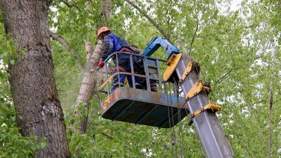 Штормовой ветер 2014 года создал серьёзную угрозу для посетителей парка
