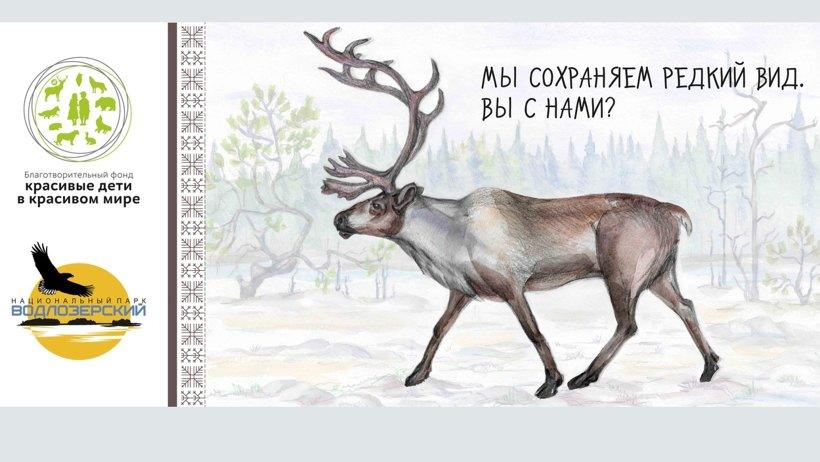 Северные олени за последние годы встречаются всё реже