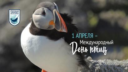 На территории национального парка «Русская Арктика» обитает два вида птиц, занесенных в Красную книгу РФ