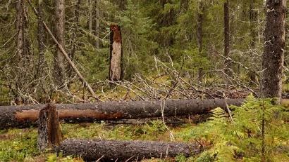 Фото из архива национального парка «Кенозерский»