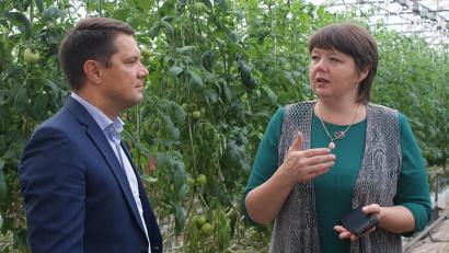 Елена Бовина: «В зависимости от времени года на агрокомбинате собирается ежесуточно от 5 то 15 тонн овощей»