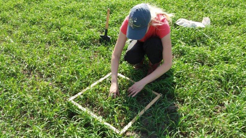 Идет учет сорной растительности в ячмене. Фото из архива Архангельского филиала Россельхозцентра