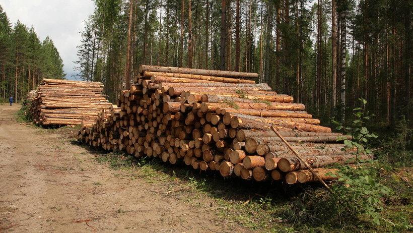 В рамках деловой программы «Лесоруба XXI века» обсуждалась стратегия развития ЛПК России