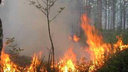 С начала сезона в Поморье произошло 40 лесных пожаров общей площадью около 170 гектаров